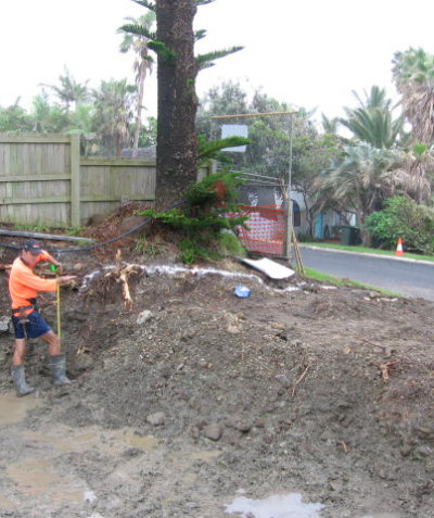 Arborist report (Tree Impact Assessment Report) for development adjacent to a very large Norfolk Island Pine (Araucaria heterophylla), Lennox Head.