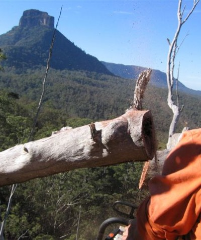 Fauna spotter catcher aerial tree hollow inspections, Mount Lindesay Highway via Kyogle