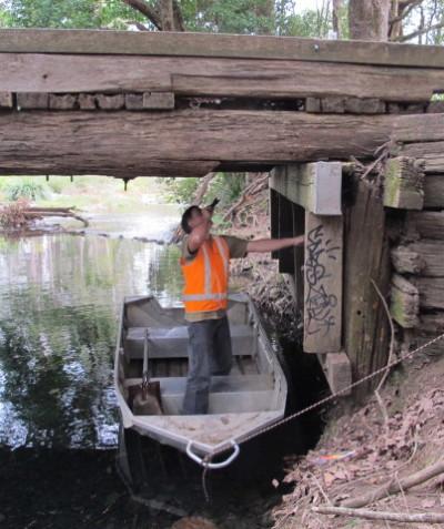 Threatened microbat roosting assessment of old bridge, Bellingen