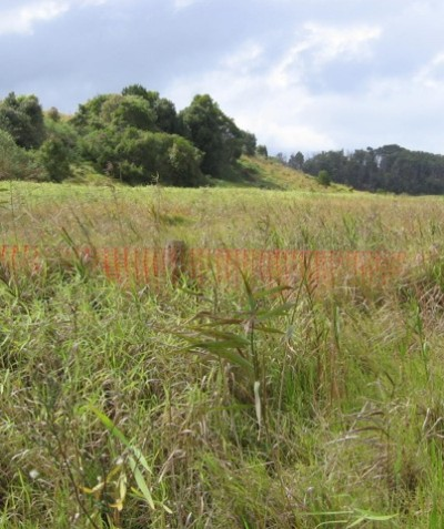 Grass Owl Survey for road construction and development, Ballina Heights