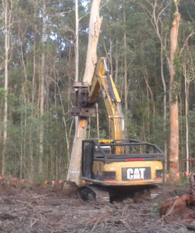 Ecologist monitoring fauna spotter catcher works for Pacific Highway tree clearing at Tabbimoble via Woodburn