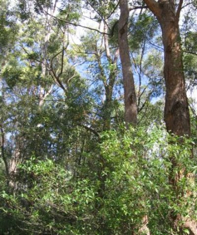 Ecologist vegetation and fauna habitat assessment for land subdivision, threatened subtropical floodplain forest, Brunswick Heads