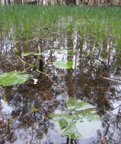 Ecologist property vegetation management plan for wetland vegetation, Bungawalbin via Casino