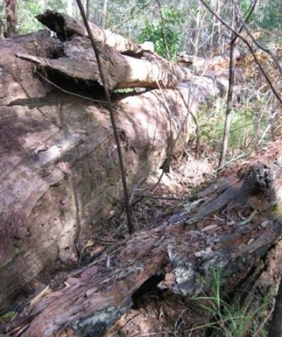 Pre clearing searches of fauna habitat, Tabbimoble via Woodburn