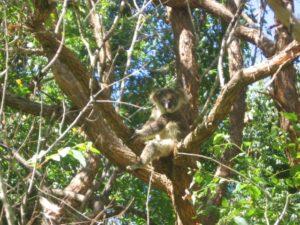 %name Koala Plans of Management KPoMs