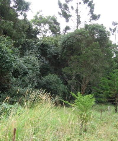 Ecologist assessment of floodplain rainforest EEC with threatened species, Pacific Highway upgrade, Coolgardie via Ballina