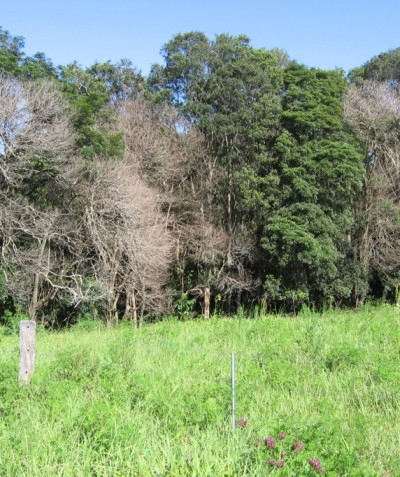 Rainforest vegetation monitoring following weed control, Alstonville