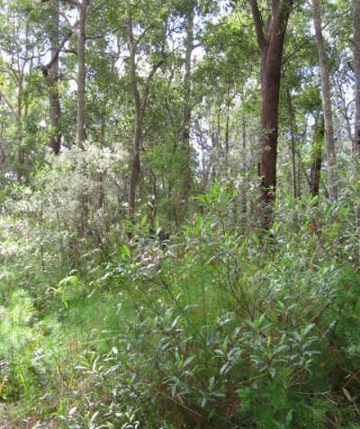 Threatened species searches in Subtropical Coastal Floodplain Forest EEC at Tucabia via Grafton