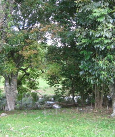 Tree protection plan for construction of creek crossing, Teven via Ballina