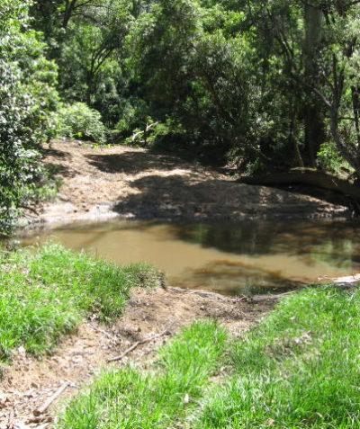 Ecologist vegetation management plan for proposed creek crossing, Rosebank Lismore Shire