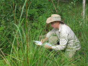 wetland vegetation ecologist development 300x225 Vegetation Assessment, Reports and Plans