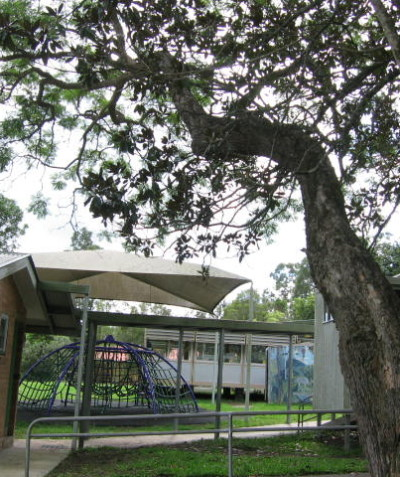Hollow and significantly leaning hazardous stem of Jacaranda recommended to be removed, Goolmangar Public School via Lismore
