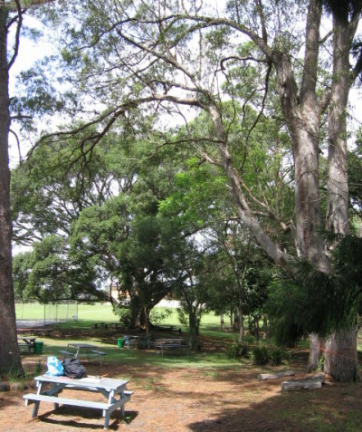 School tree risk assessment, Modanville via Lismore