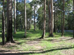 ecologist environmental impact koala 300x225 Koala Plans of Management KPoMs
