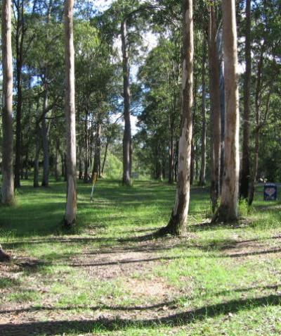 Environmental impact assessment for power line installation in koala habitat and EEC, Illuka