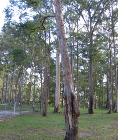 Tree risk assessment of hazard trees prior to development, Illuka