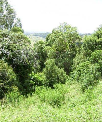 Bushfire vegetation assessment for residential development, Goonellabah via Lismore