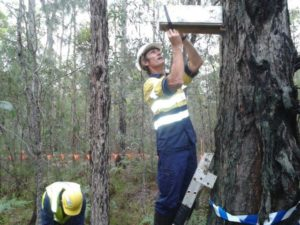 ecologist survey forest 300x225 Flora and Fauna Survey