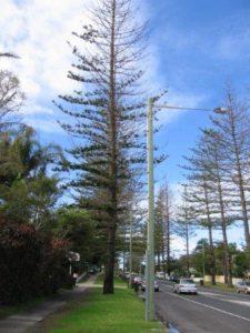 arborist trees report Byron 225x300 Arborist Services