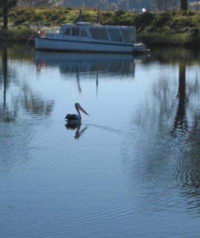 Flora & fauna impact assessment & mitigation measures, new Sportsmans Creek bridge construction, Lawrence via Grafton