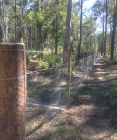 Pre-clearing ecologist assessment and spotter catcher works for endangered coastal emu population fence construction, Tucabia via Grafton