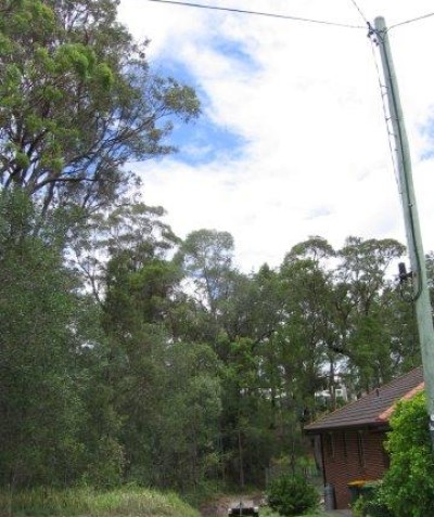 Tree risk assessment and report including house and power line target assessment, Maclean