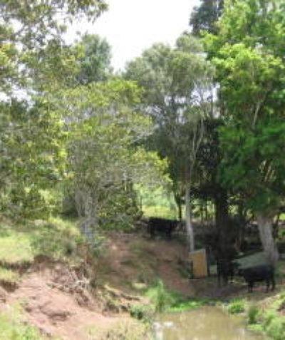Ecologist Vegetation Management Plan (VMP) for subdivision at Mcleans Ridges via Lismore