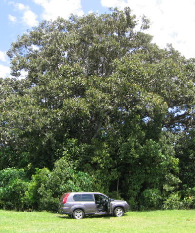 Tree impact assessment report and plan for house construction, Lennox Head