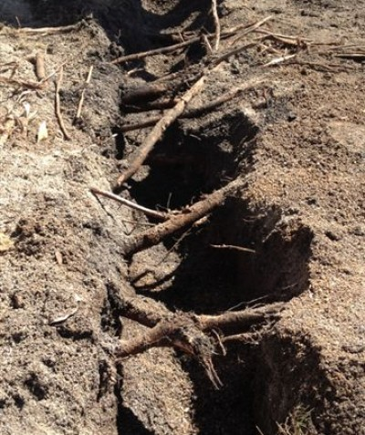 Tree root impact assessment for building footings excavation, Byron Bay