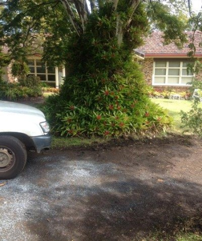 Tree root impact assessment for driveway construction, Goonellabah via Lismore