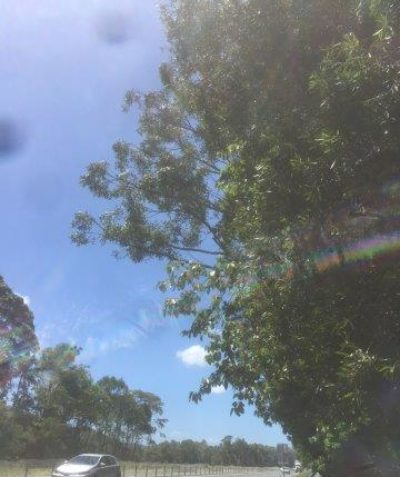 Pacific Highway tree risk assessment, Ballina