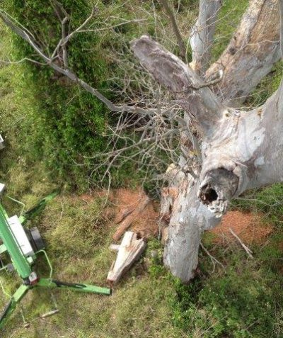 Spotter catcher works in EWP for tree clearing, Summerland Way, Richmond Valley