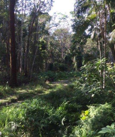 Crown road environmental impact assessment, Byron Bay