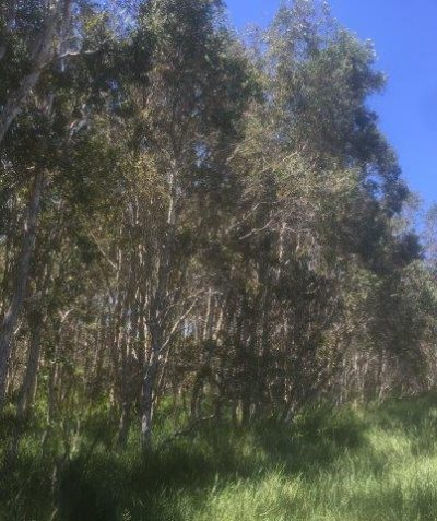 Subdivision environmental impact assessment, Evans Head