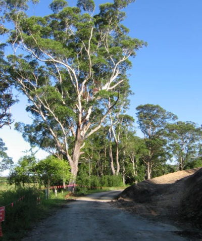 Tree risk assessment for Pacific Highway upgrade access track, Wardell via Ballina