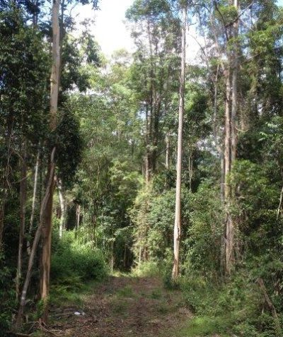 Ecologist clearing assessment of lowland rainforest Endangered Ecological Community (EEC), Office of Environment and Heritage (OEH), Cherry Tree SF via Casino